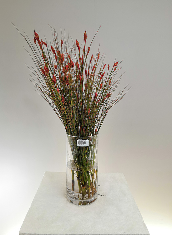 Bell reed red